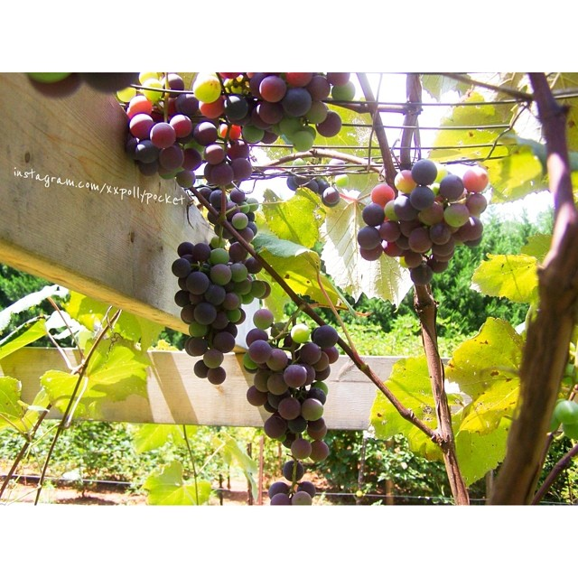 more grapes @ moms #littlemomentsapp