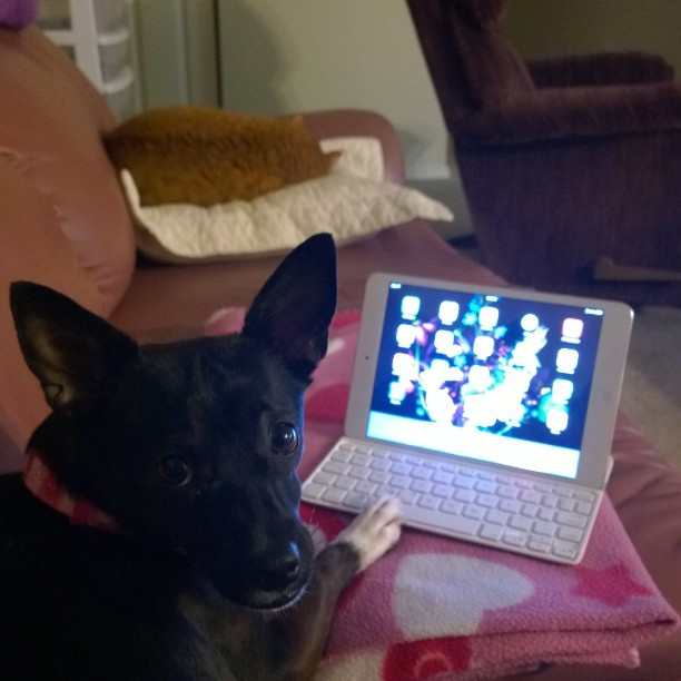Marley is working on the iPad and Sam Is asleep lol