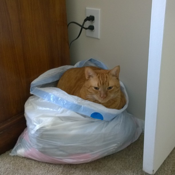 I was cleaning out some clothes the other day and left the bag sitting and of course Sam decided to sleep in it.