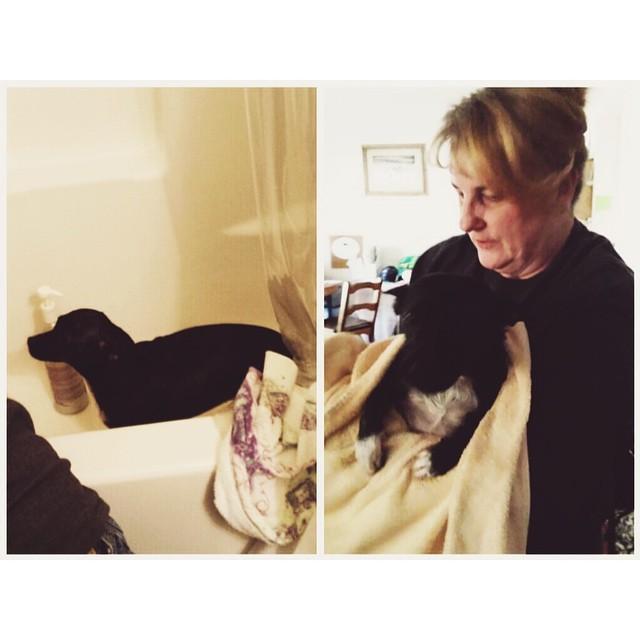 #littlemomentsapp Mom gave Marley a bubble bath today :)
