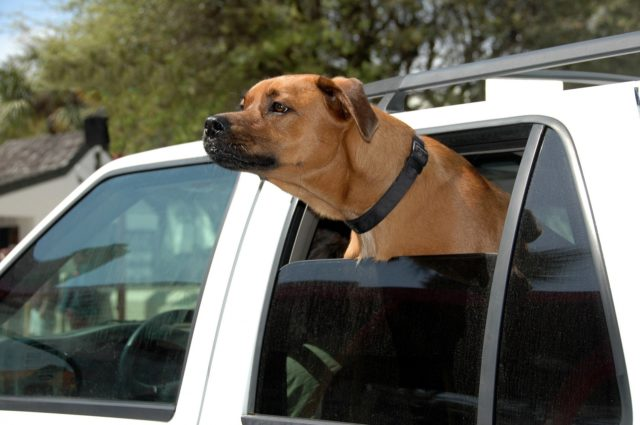 cute-dog-with-head-out-car-window