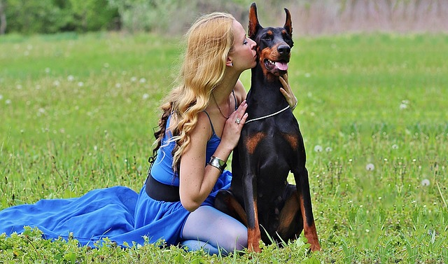 Doberman Love Blonde Woman Kisses