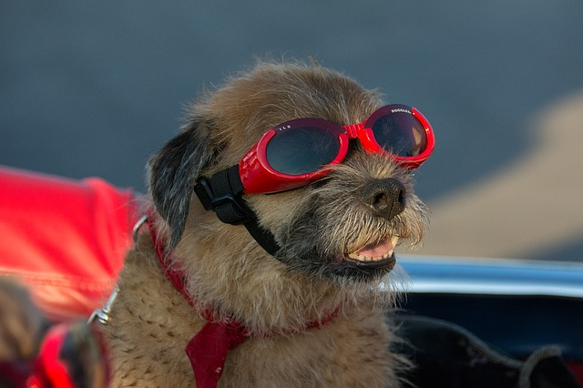 Vacation Goggles Pet Funny Dog Terrier Canine