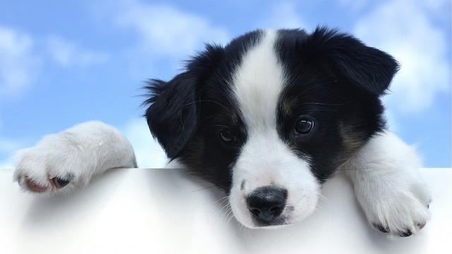 puppy-1237213_640