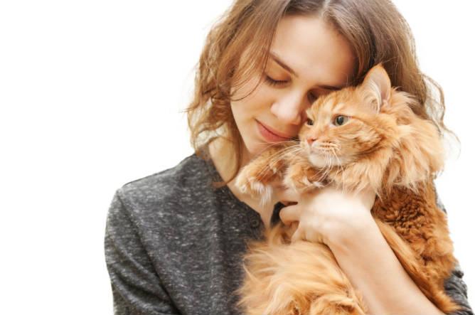 cat_cuddles_causes_stress